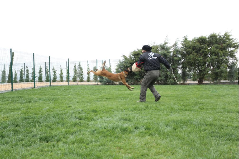 Flydog